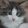 子猫成長記(ノル2ヶ月) ライブ壁紙