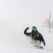 スノったーA | ウィンターシーズン到来!全国のスキー場の「今」の情報をチェックしてスキー・スノボに行こう!